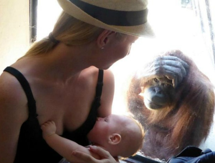 Photo Elizabeth said the orangutan gave her a nod while she was breastfeeding. (Supplied to ABC)